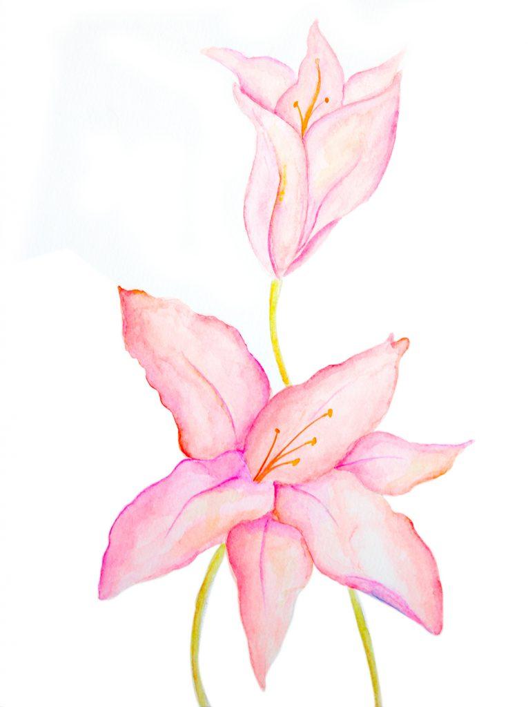 30x40 lilium pink