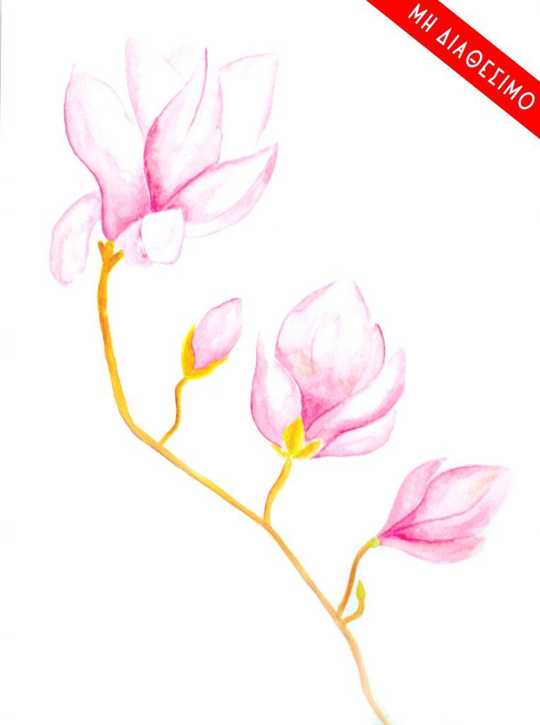 30x40 magnolia